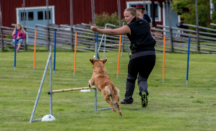 tollare-agility-1