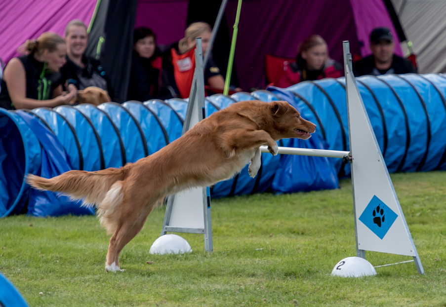 tollare-agility-102