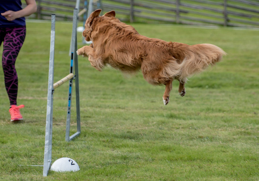 tollare-agility-104