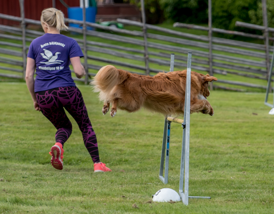 tollare-agility-105
