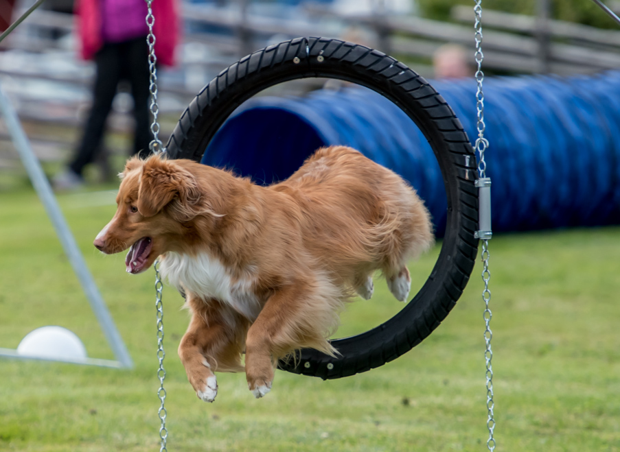 tollare-agility-107