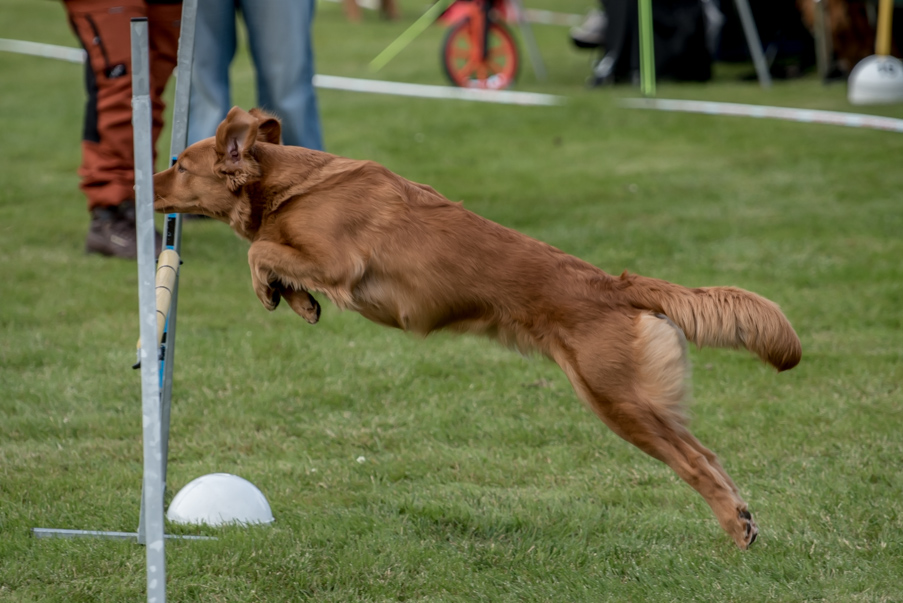 tollare-agility-108