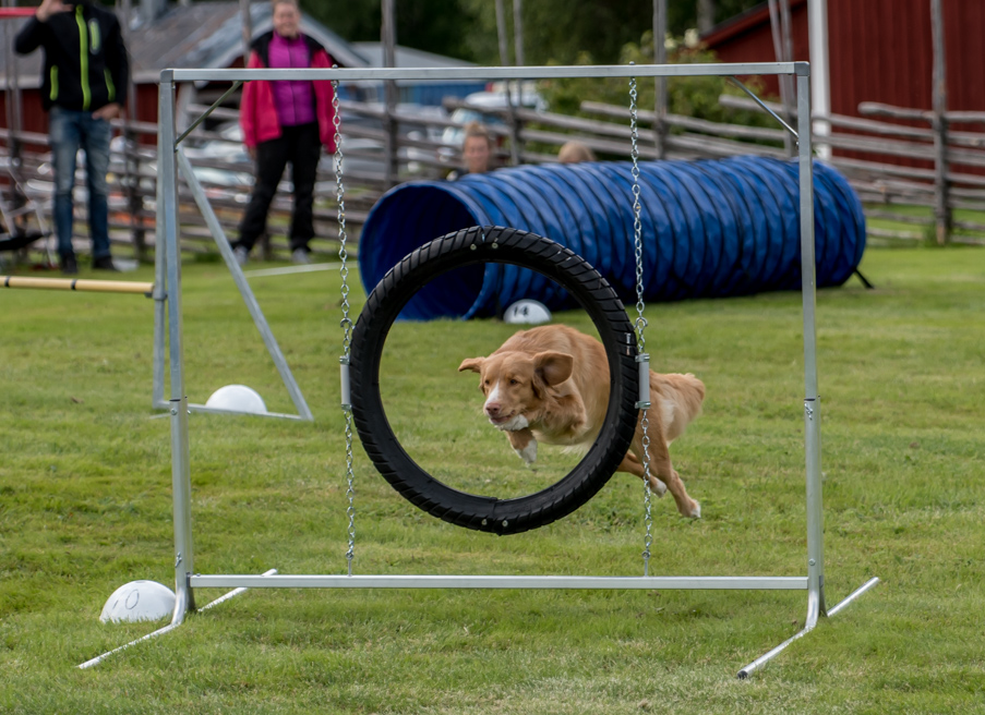 tollare-agility-11