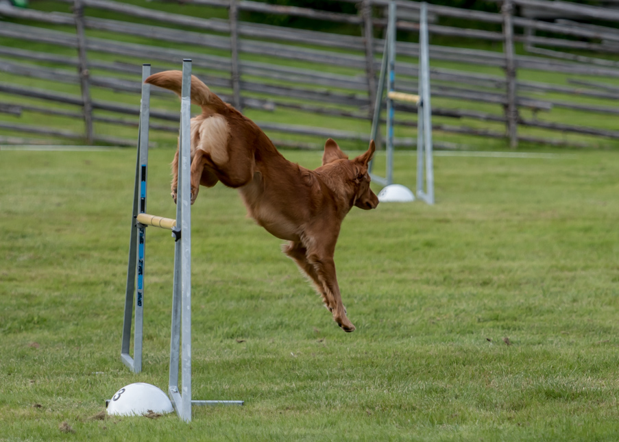tollare-agility-110