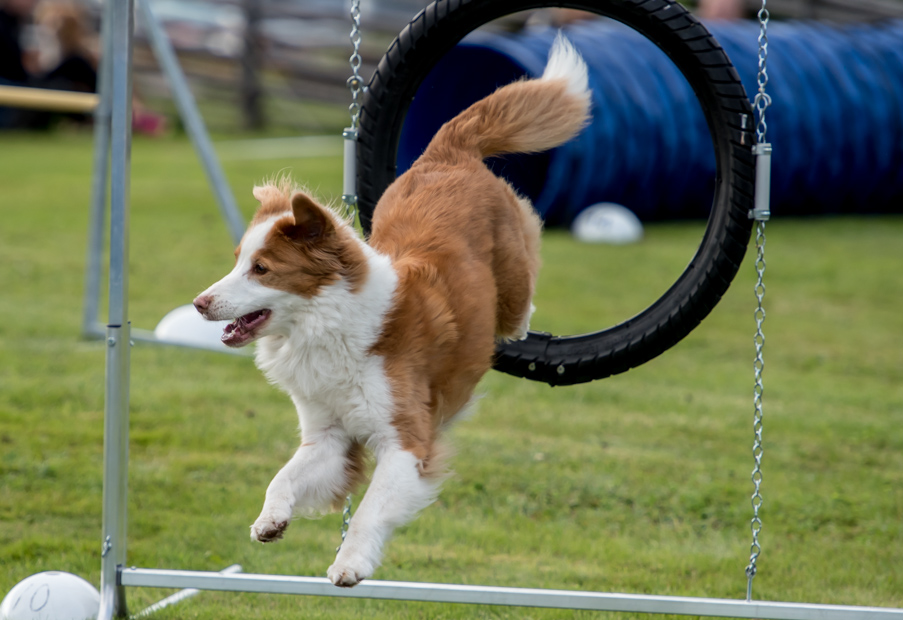 tollare-agility-117