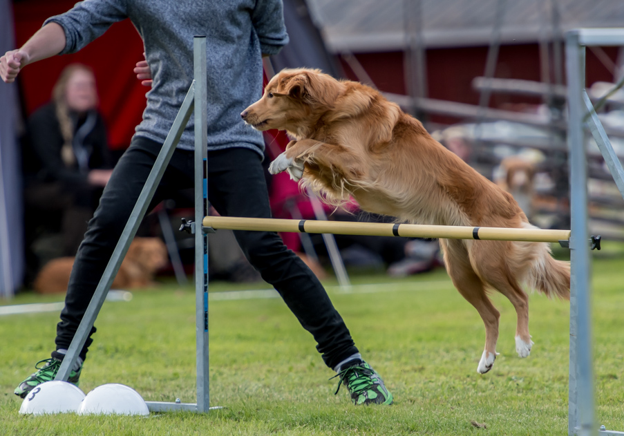 tollare-agility-118