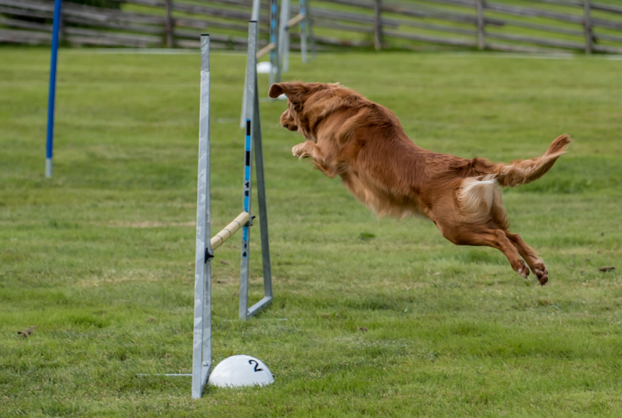 tollare-agility-12