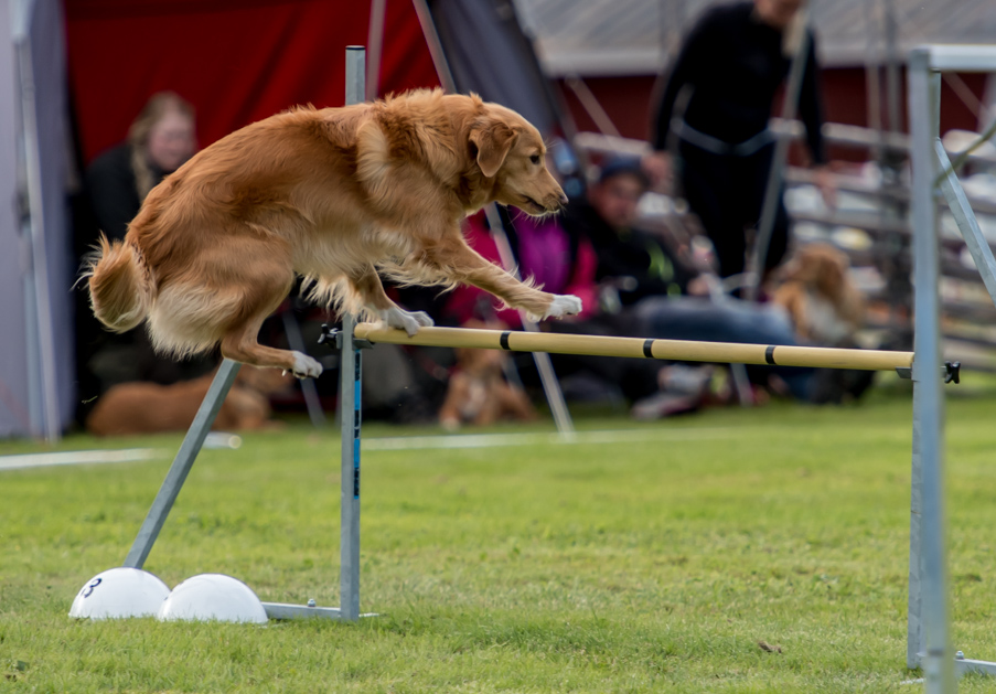tollare-agility-120