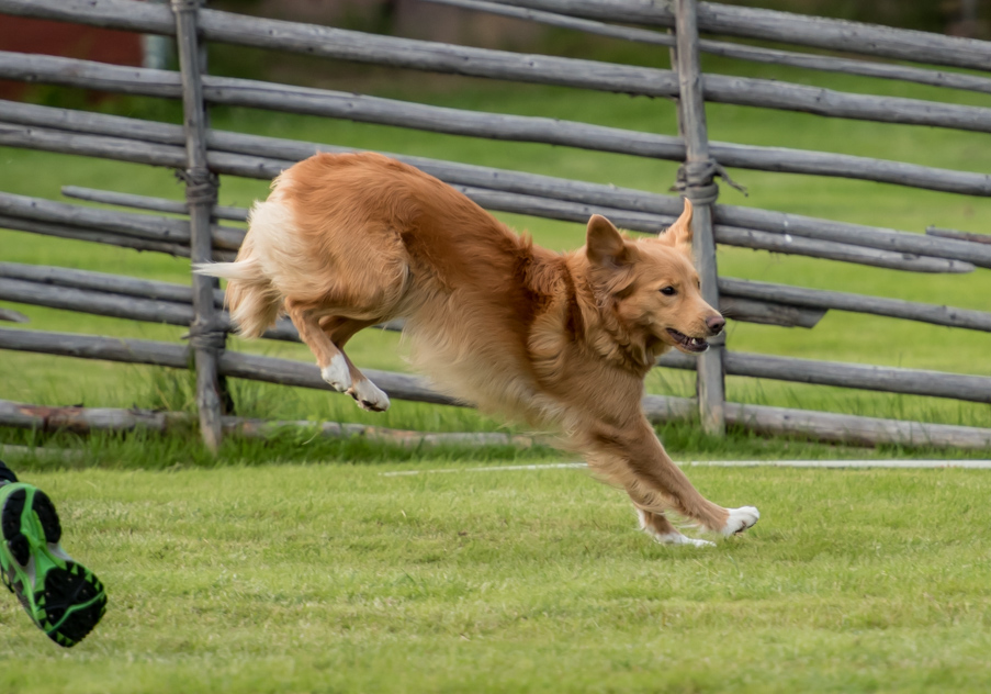 tollare-agility-121