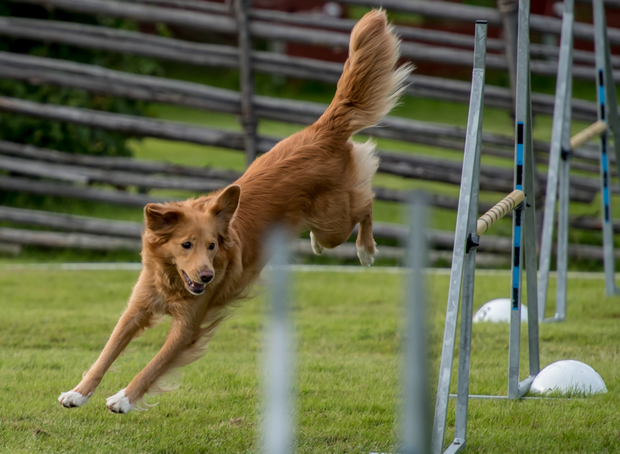 tollare-agility-122