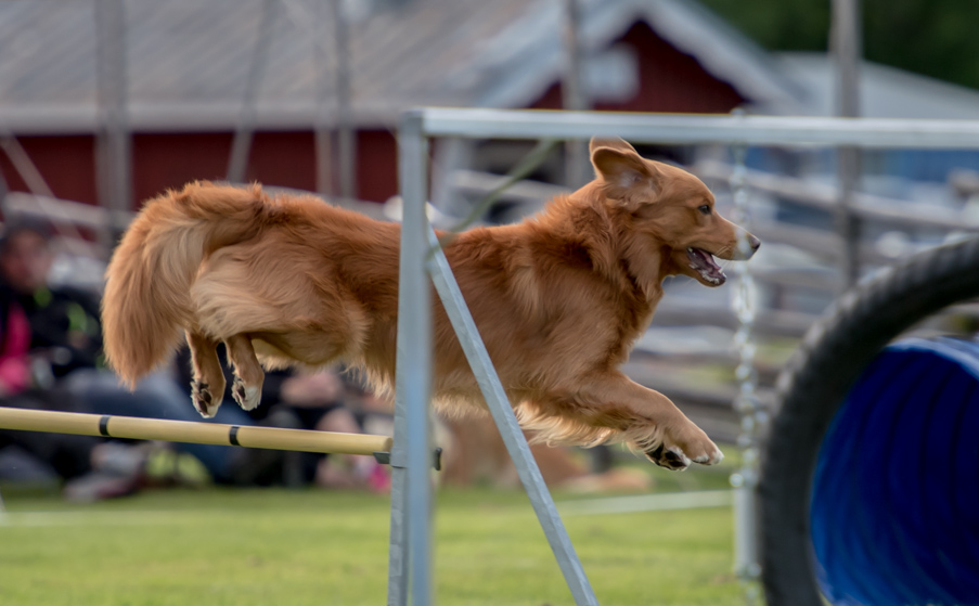 tollare-agility-124