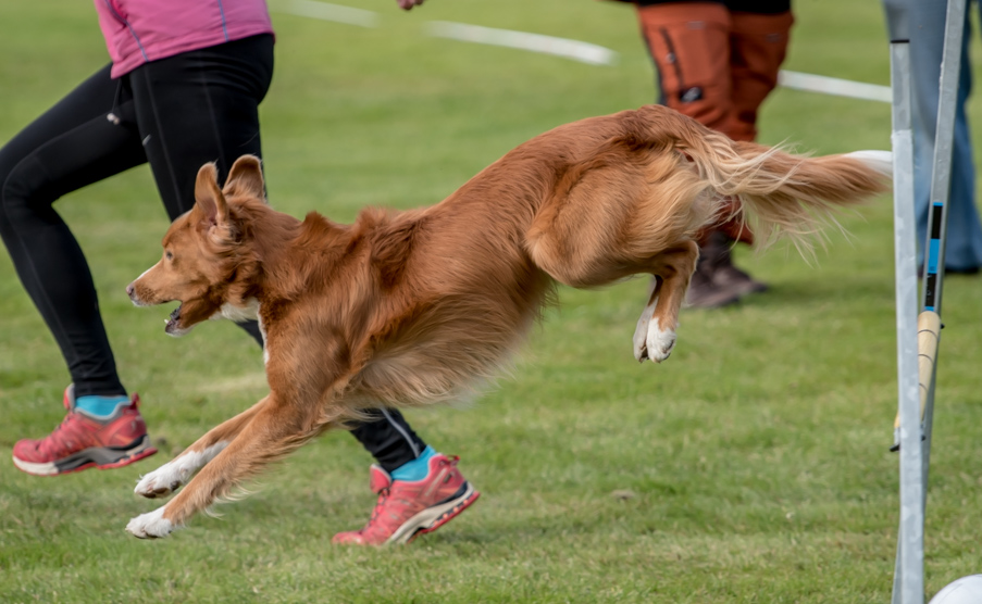 tollare-agility-126