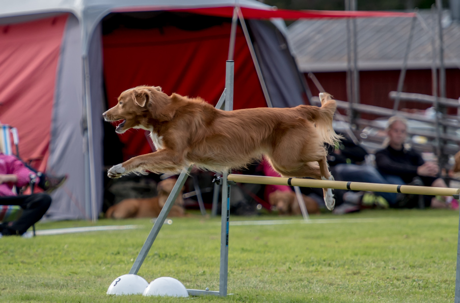 tollare-agility-127