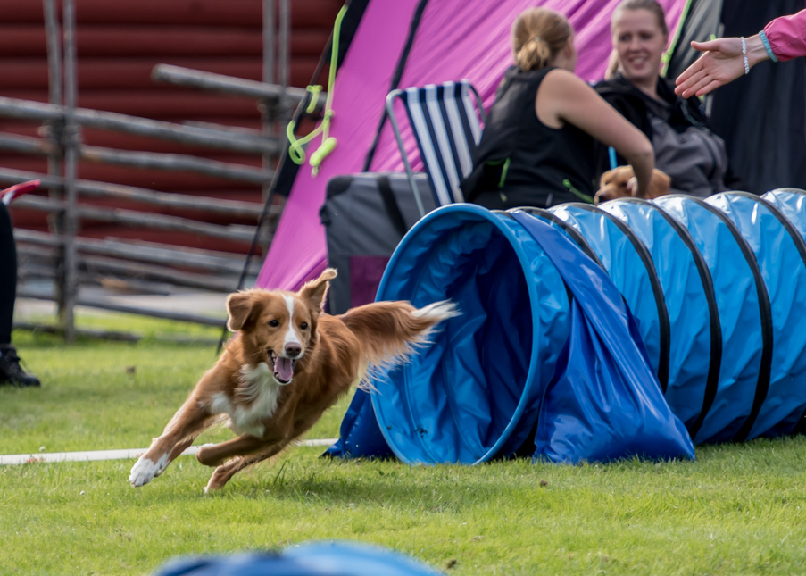 tollare-agility-128