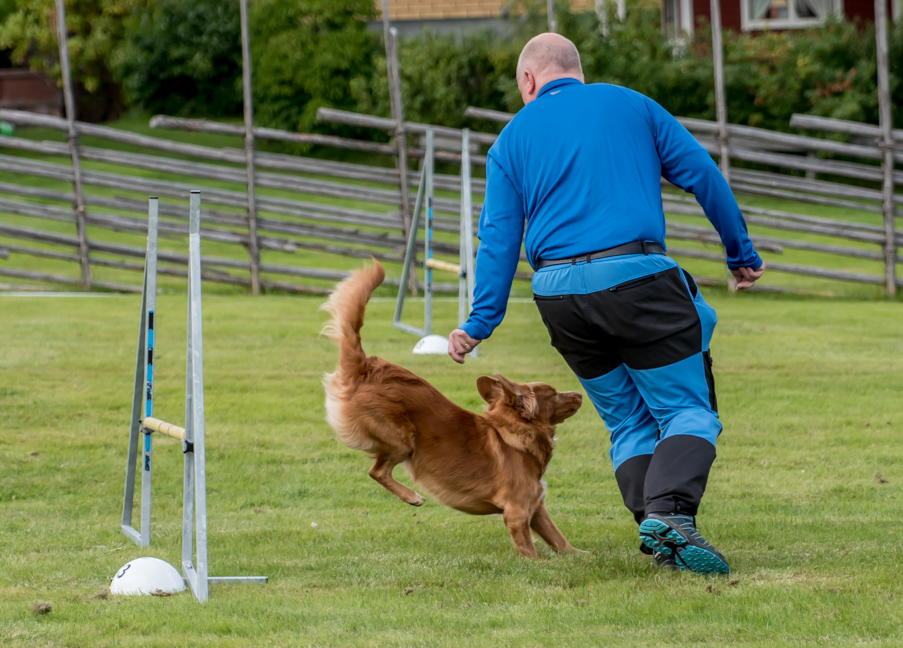 tollare-agility-13