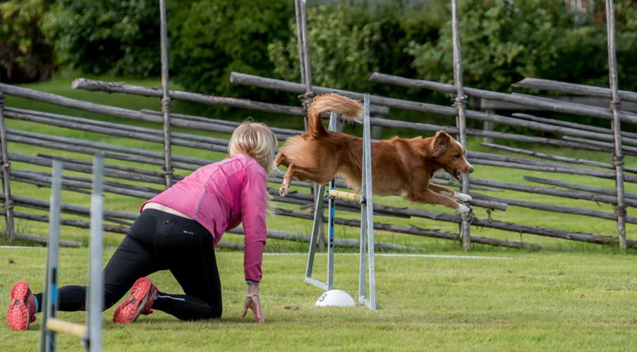 tollare-agility-130