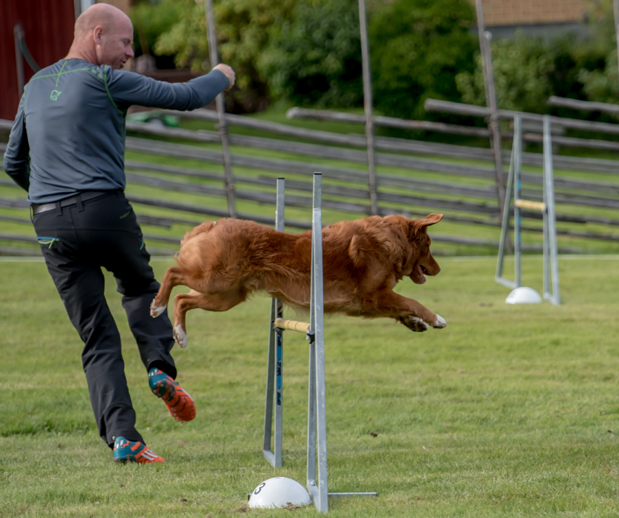 tollare-agility-131