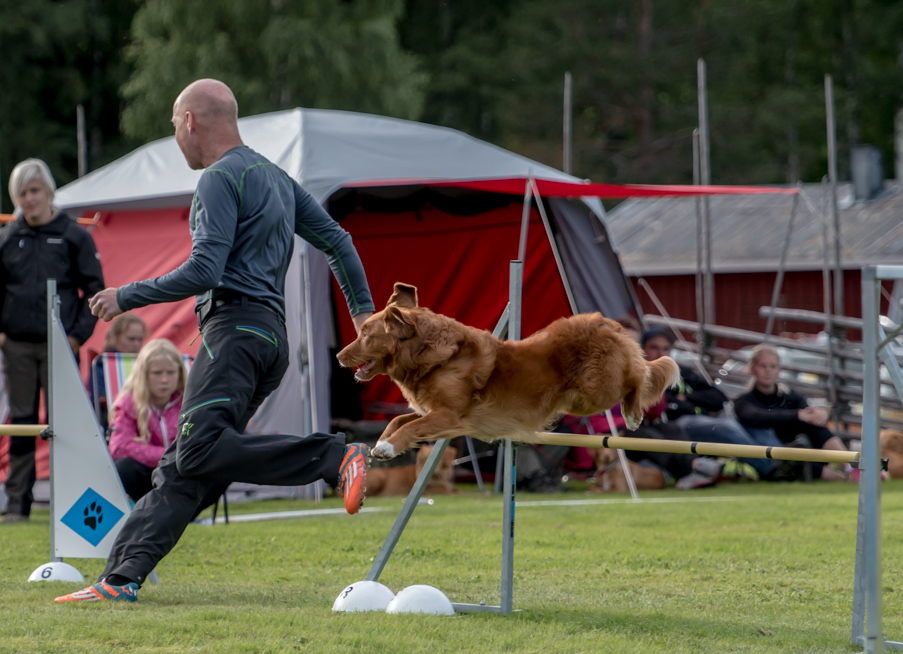 tollare-agility-132