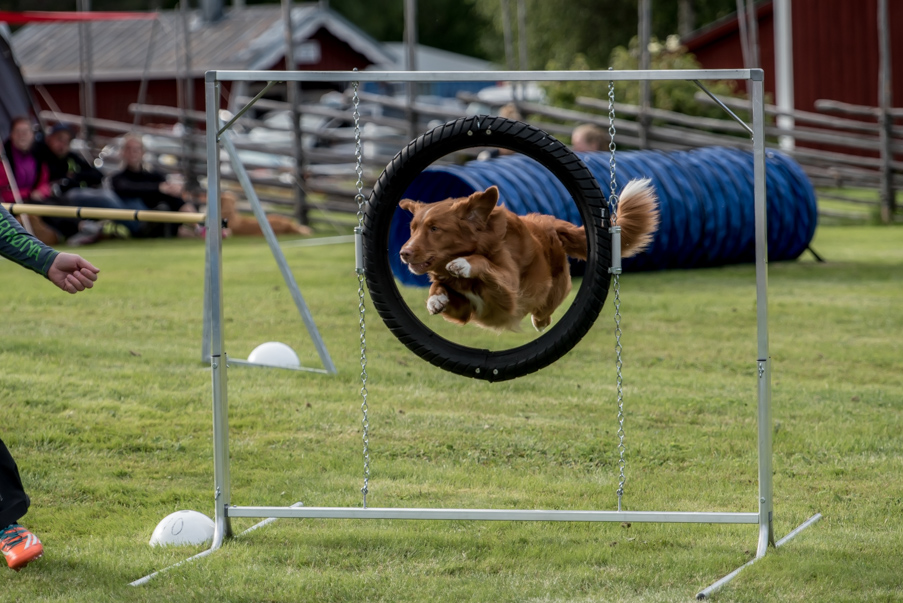 tollare-agility-133