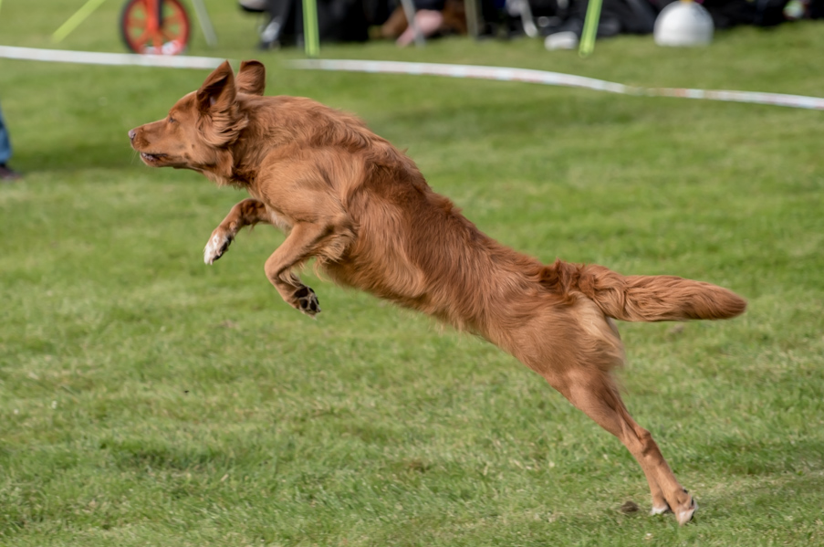 tollare-agility-136