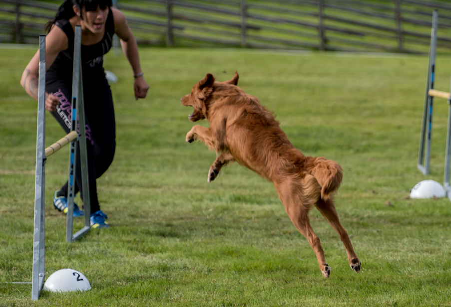 tollare-agility-137