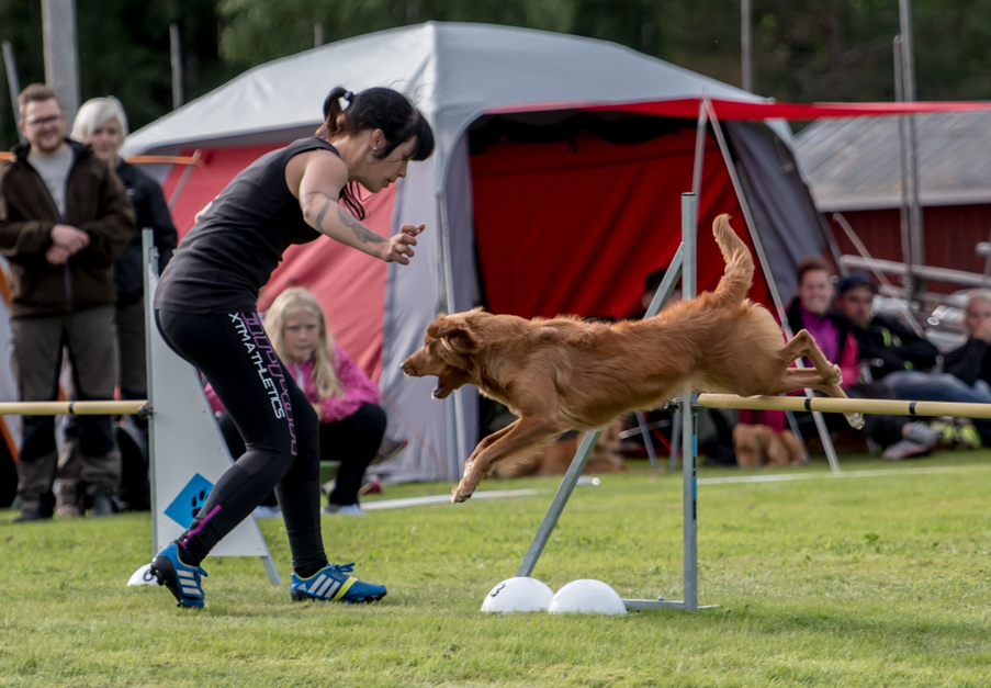tollare-agility-138