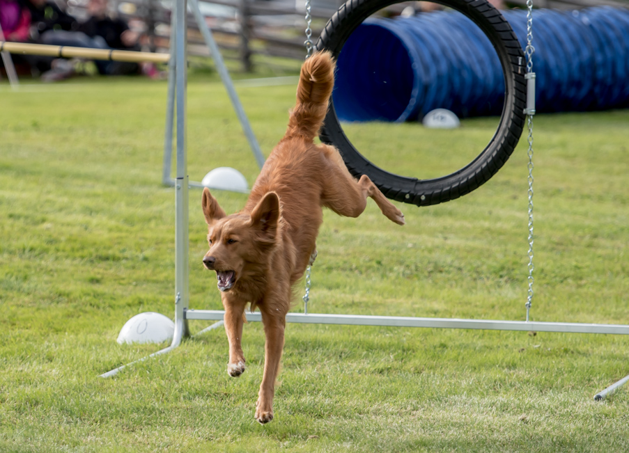 tollare-agility-139