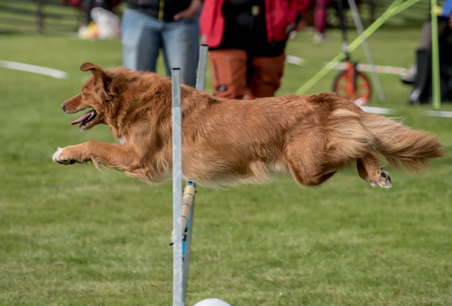 tollare-agility-140