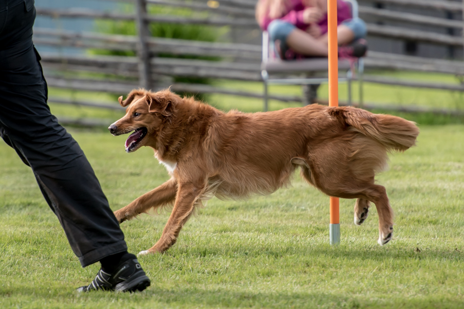 tollare-agility-141