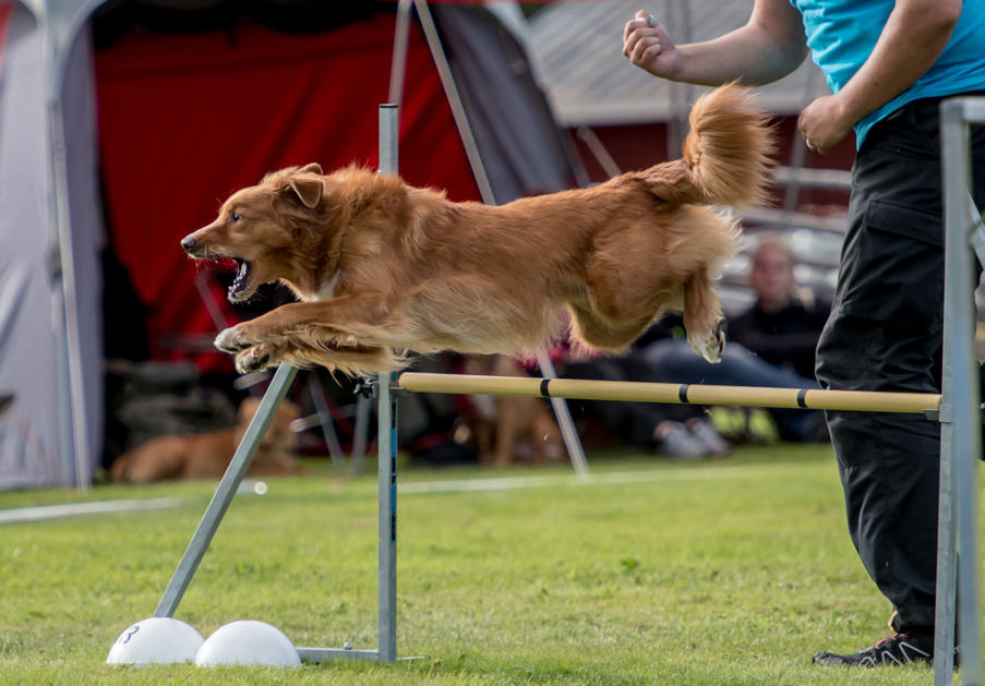 tollare-agility-142