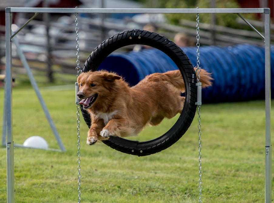 tollare-agility-144