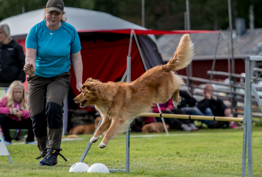 tollare-agility-148