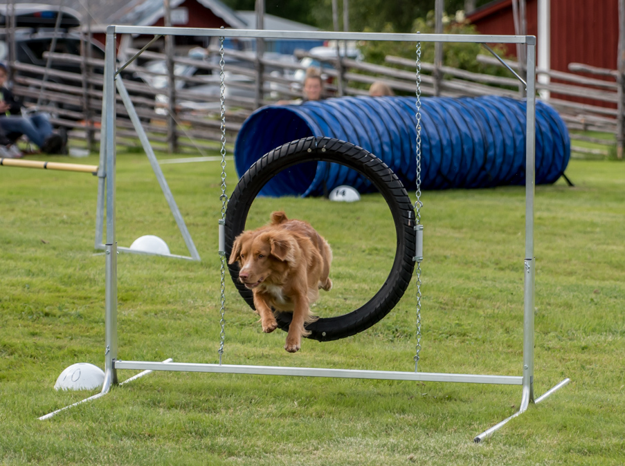 tollare-agility-15