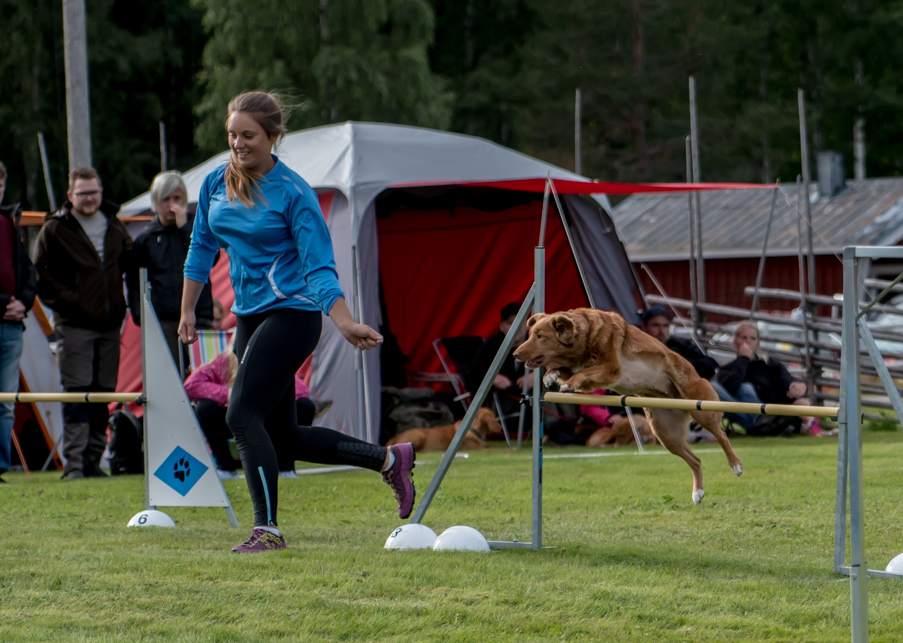 tollare-agility-151