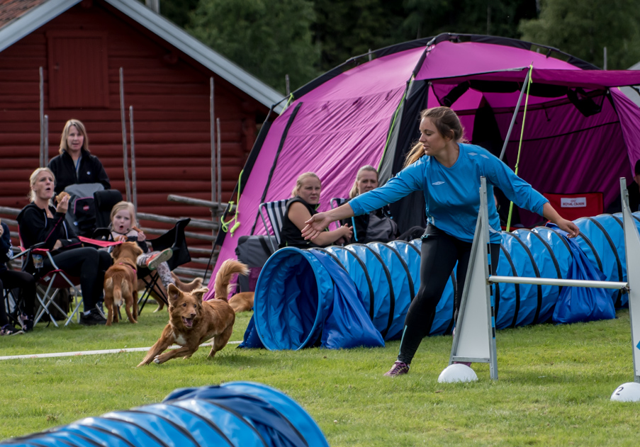 tollare-agility-152