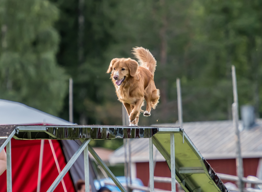 tollare-agility-154