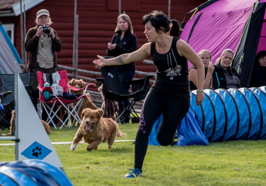 tollare-agility-158