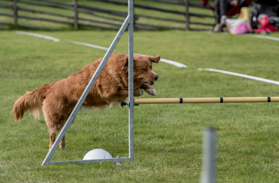 tollare-agility-159