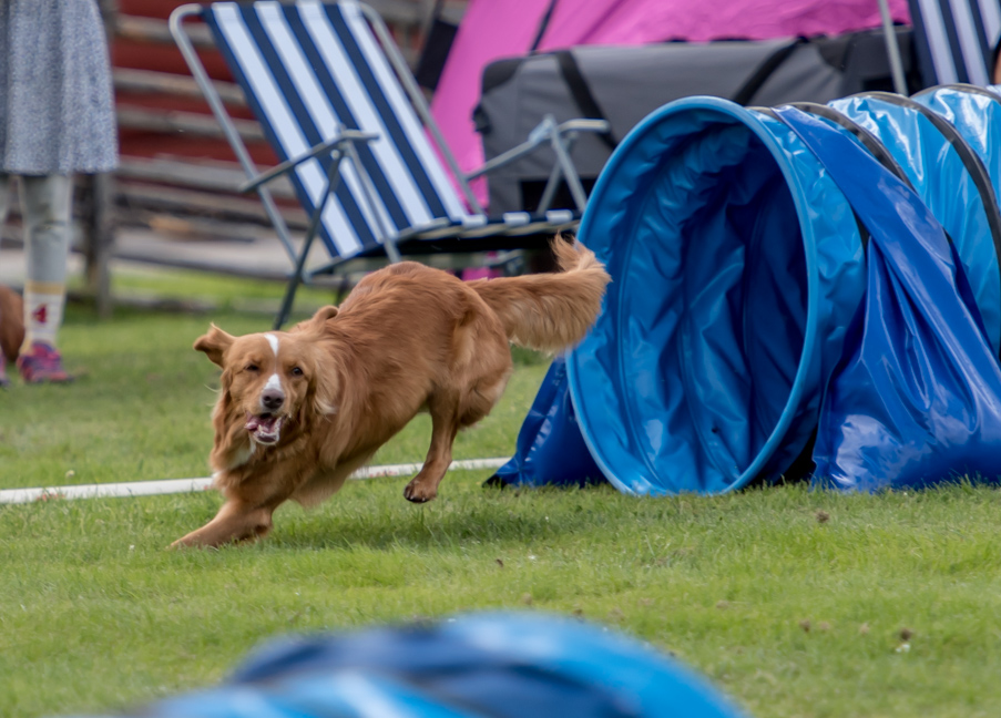 tollare-agility-16