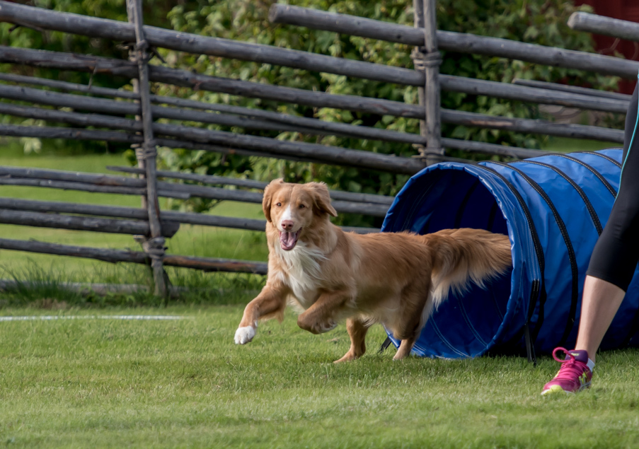 tollare-agility-161