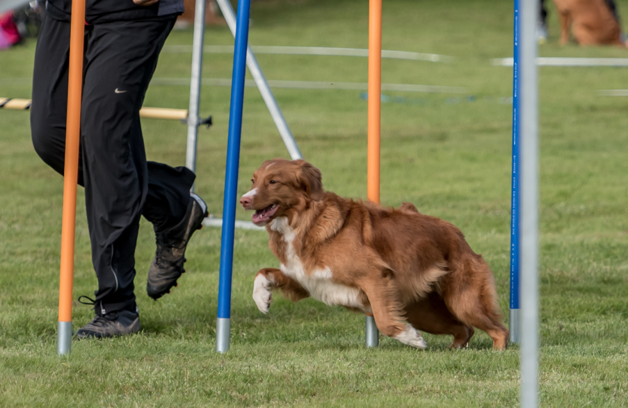 tollare-agility-163
