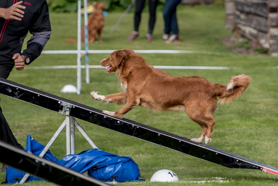 tollare-agility-166