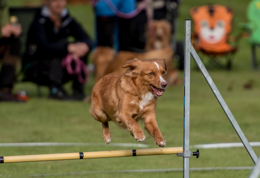tollare-agility-167