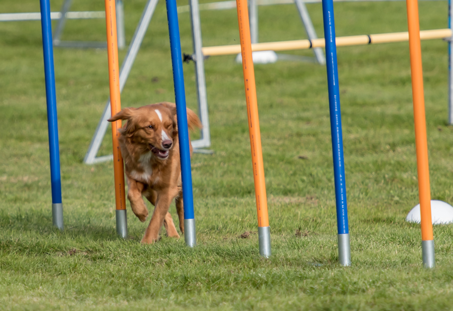 tollare-agility-169