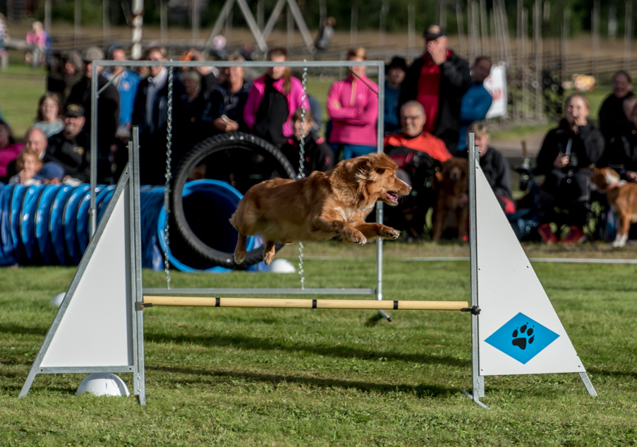 tollare-agility-170