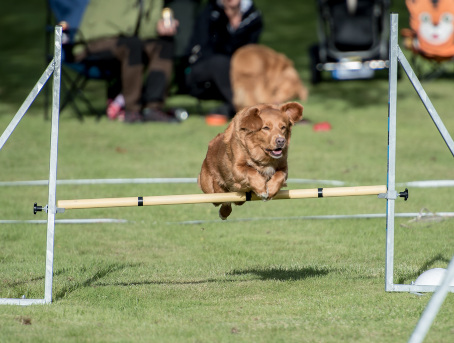 tollare-agility-173