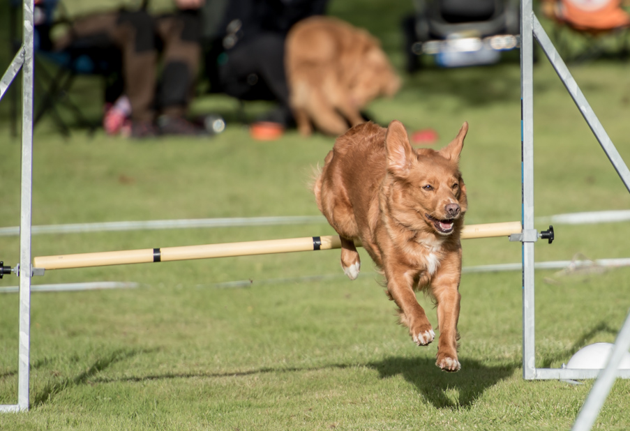 tollare-agility-174
