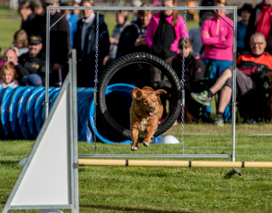 tollare-agility-175