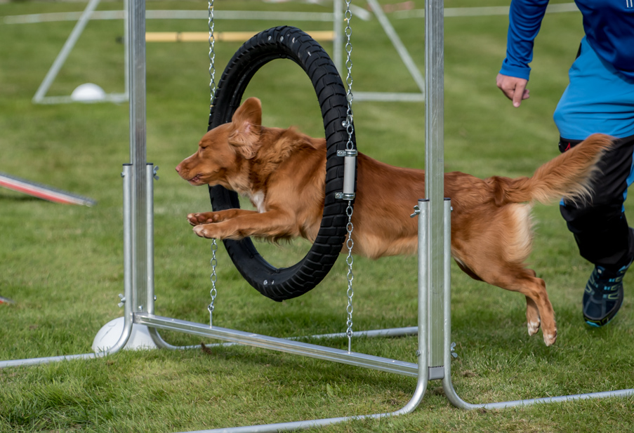 tollare-agility-177