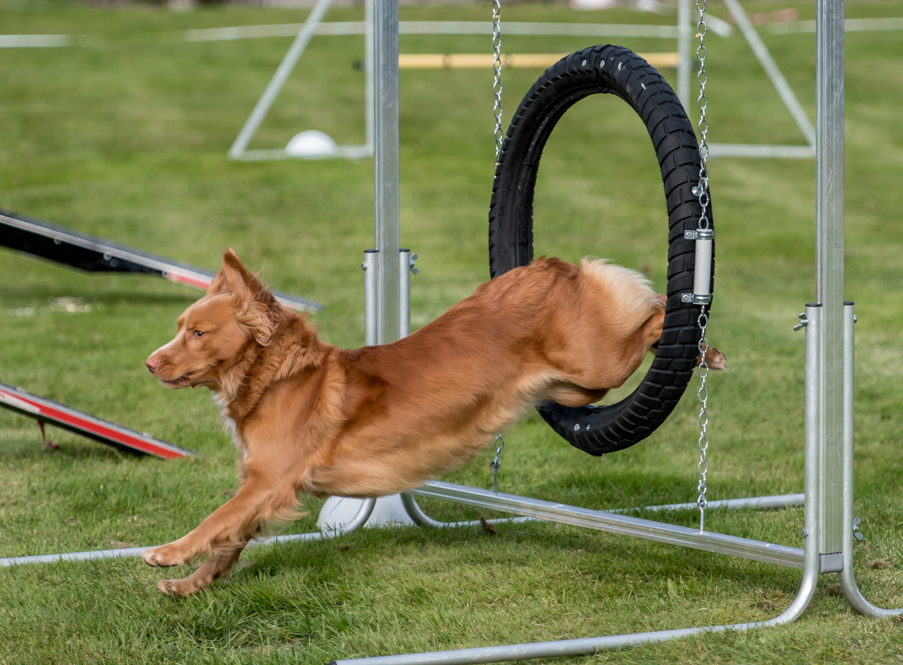 tollare-agility-178